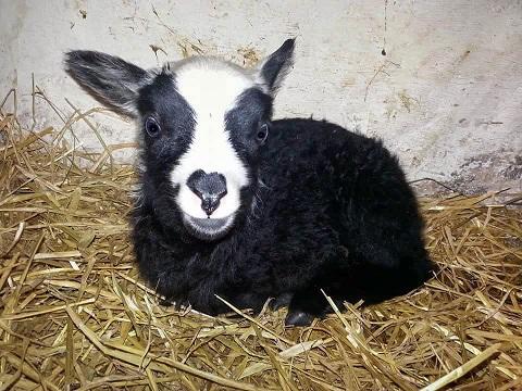 Pieni Lammas